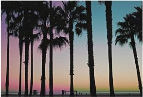 nature. venice beach, california by kino acosta