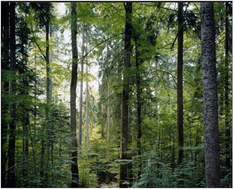 untitled by thomas struth