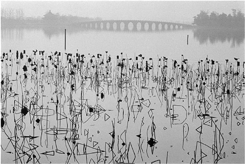 "china. beijing. 1964. ""former summer palace. dead lotus flowers on the kunming lake."" by rené burri"