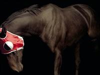 pleasure park horse #10 by elena dorfman