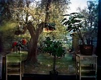 camera obscura: garden with olive tree inside room with plants, italy by abelardo morell