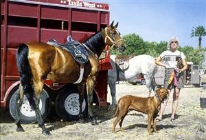 western tableau with rhodesian ridgeback (trials west), by richard mclean