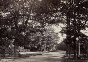 roadway in the bois de boulogne by charles marville
