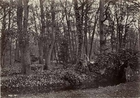 stream in the bois de boulogne by charles marville