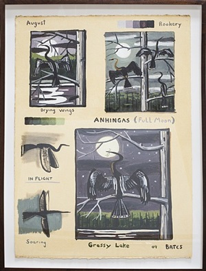 anhingas-august by david bates