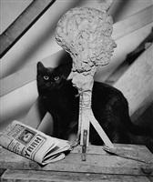 the studio cat, paris by andré kertész