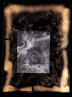 venus rising like a kansas by william s. burroughs
