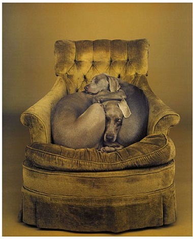 nest by william wegman