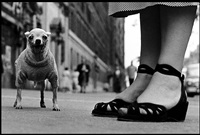 usa. new york city. 1946. by elliott erwitt