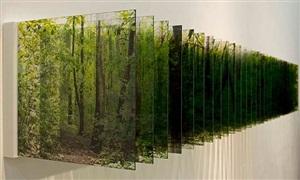 forest by nobuhiro nakanishi