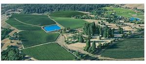 irrigation pond by sandra mendelsohn rubin