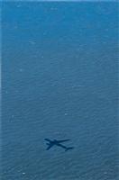 landing at sfo by sandra mendelsohn rubin