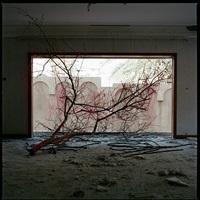 tangled by lamya gargash