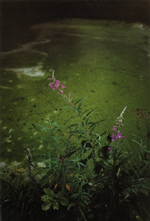green mirror, from the series forest by jitka hanzlová
