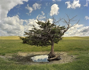homesteaders tree, cherry county, from the series dirt meridian by andrew moore