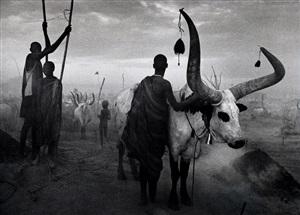 dinka group at pagarau, southern sudan, from the series genesis by sebastião salgado