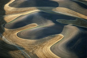 wheat farming follows the contour of the palouse, pullman area, washington by alex s. maclean