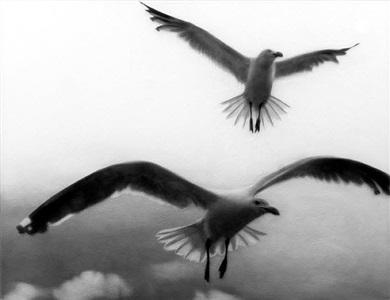 birds by sarah leahy