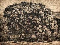 the big willows by luigi lucioni