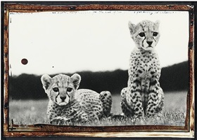 cheetah cubs at mweiga nr nyeri, kenya by peter beard