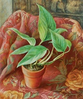 philodendron by robert elton tindall