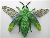 jewel beetle by shawn smith