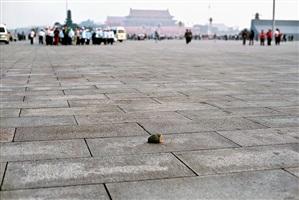cobblestone by zhao zhao