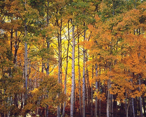 forest light, colorado by christopher burkett
