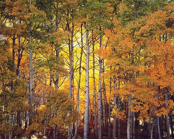 forest light, colorado by christopher burkett