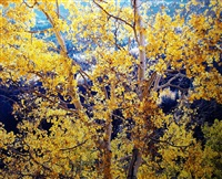 radiant mountain aspen, colorado by christopher burkett