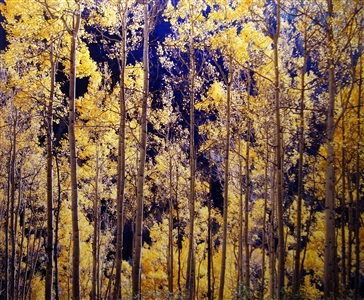 telluride aspens, colorado by christopher burkett