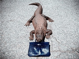 gator by tyler shields