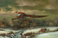 pheasant flying by m. p. elliott