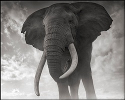 elephant against sky by nick brandt