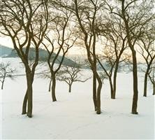 obstbäume by bernhard fuchs