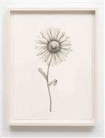 sweetheart (nipple flower) by aurel schmidt