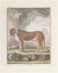 big cats (set of 4) by georges louis leclerc buffon