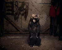 ciprian the bear dancer (salatruc, east romania) by tamas dezso