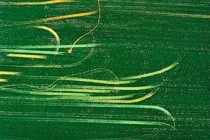 tracks of tomatoes in field, north central ohio by alex s. maclean