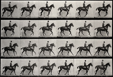 """daisy"" cantering, saddled by eadweard muybridge"