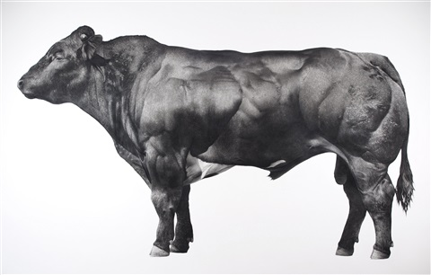 bull by jonathan delafield cook