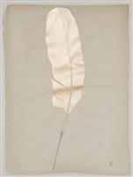 gold feather by elena del rivero