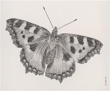 butterfly 2014.7 by zhang yirong