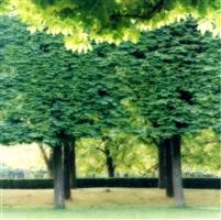4-07-19c-10 parc de sceaux, france by lynn geesaman