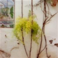 3-02-48c-3, 2002, palacio de viana, spain by lynn geesaman