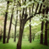 4-03-6c-11 bernheim arboretum, ky by lynn geesaman