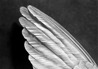untitled (angel's wing) by robert longo