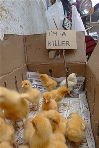 i am a killer by christian eisenberger