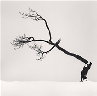 kussharo lake tree, study no 6, kotan, hokkaido, japan, 2007 by michael kenna