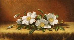 cherokee roses on yellow velvet by martin johnson heade